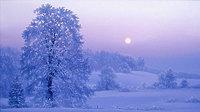 Зимняя эллегия