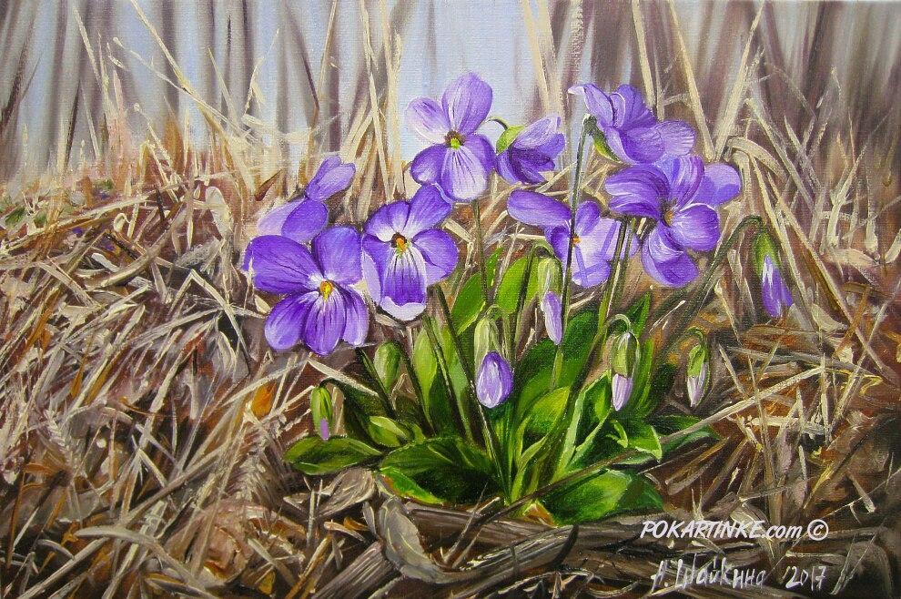 Лесные фиалки - картинная галерея PoKartinke.com