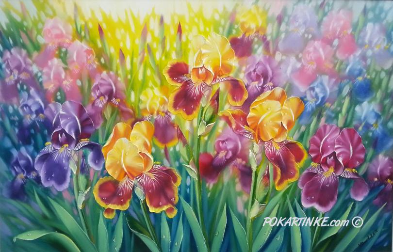 Ирисы - картинная галерея PoKartinke.com