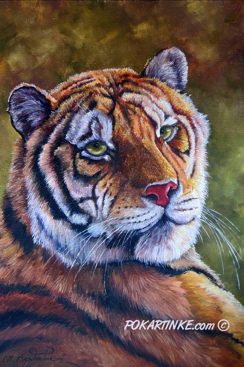 Тигр - картинная галерея PoKartinke.com