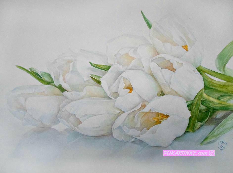 Белые тюльпаны - картинная галерея PoKartinke.com